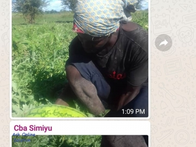 REPORT FROM SIMIYU